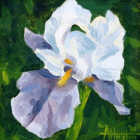 Spring Iris - Impressionist Painting by Adam Houston